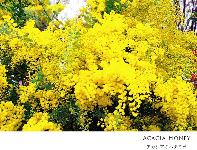 miele Acacia アカシアの蜂蜜 250g by Podere il Casale