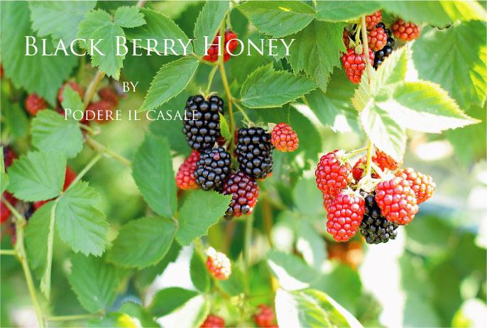 blackberry honey (ブラックベリーのハチミツ)