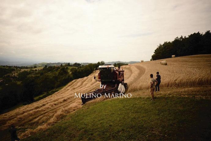イタリアの小麦老舗メーカー ムリノ・マリノの収穫 (harvest Italian old maker of flour mill Murino Marino)