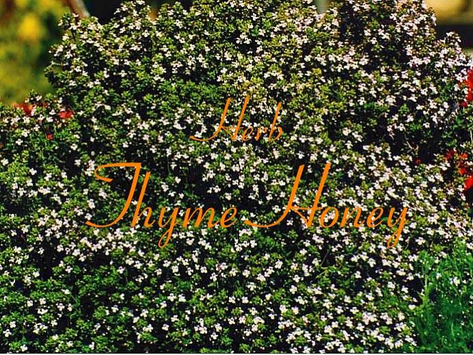 ハーブ・タイムのハチミツ(イタリア・シチリア産)Torimarchi社 イメージ